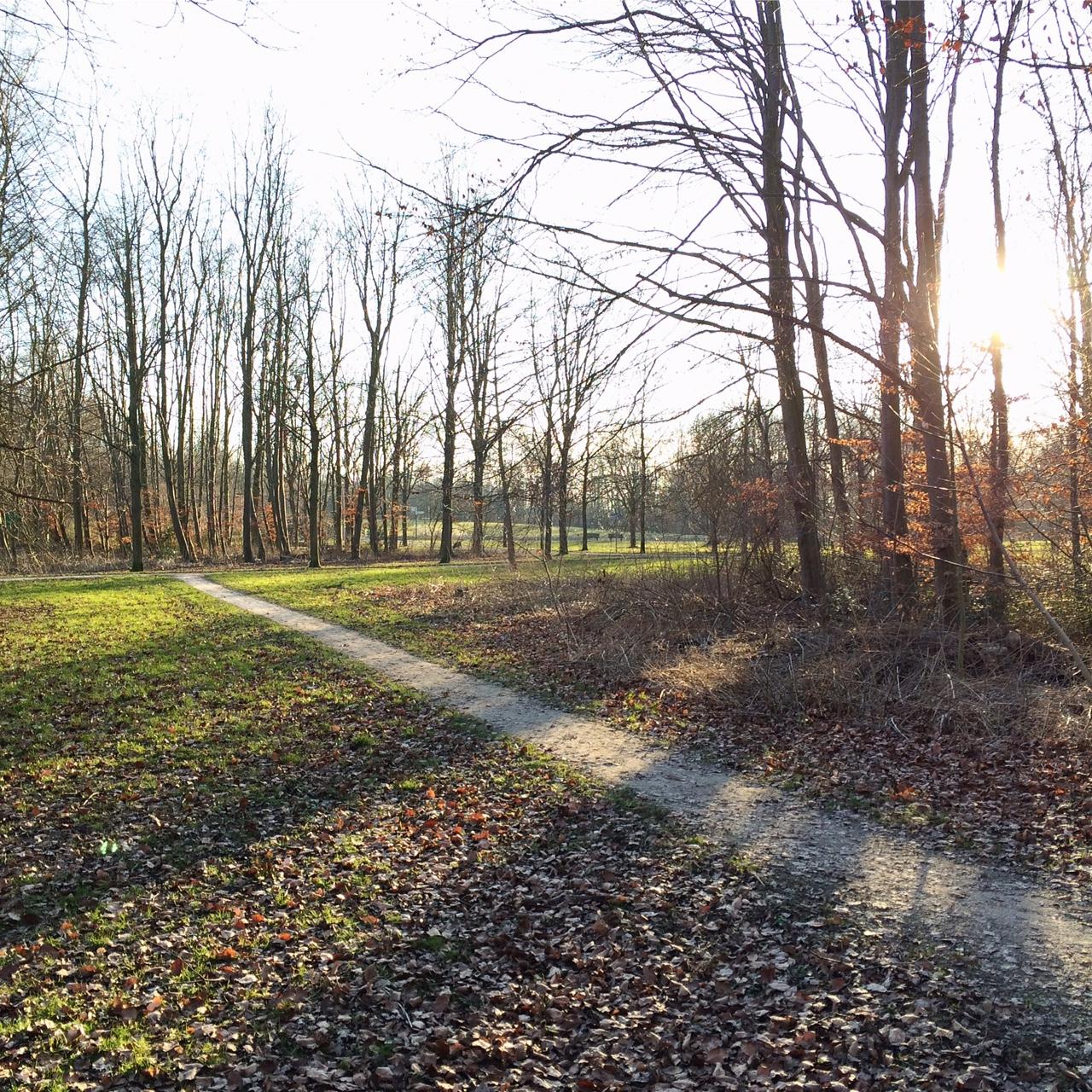 Sunbeams through tree